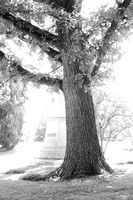 Tree and Monument