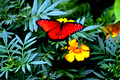 Krohn Conservatory: Visitors, Orchids, Moths, and Butterfies