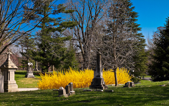 Yellow Bushes, Spring Grove